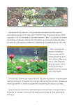Lingnan Gardeners Newsletter (No. 18) = 嶺南彩園通訊 (第18期)