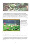 Lingnan Gardeners Newsletter (No. 18) = 嶺南彩園通訊 (第18期) by Lingnan Gardeners, Kwan Fong Cultural Research and Development Programme, Lingnan University