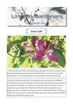 Lingnan Gardeners Newsletter (No. 26) = 嶺南彩園通訊 (第26期)