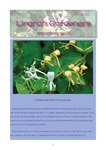 Lingnan Gardeners Newsletter (No. 31) = 嶺南彩園通訊 (第31期)