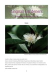 Lingnan Gardeners Bimonthly Newsletter (No. 43) = 嶺南彩園通訊 (第43期) by Lingnan Gardeners, Kwan Fong Cultural Research and Development Programme, Lingnan University