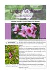Lingnan Gardeners Bimonthly Newsletter (No. 47) = 嶺南彩園通訊 (第47期) by Lingnan Gardeners, Kwan Fong Cultural Research and Development Programme, Lingnan University