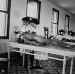 国立中山大学医学院学生的解剖实习